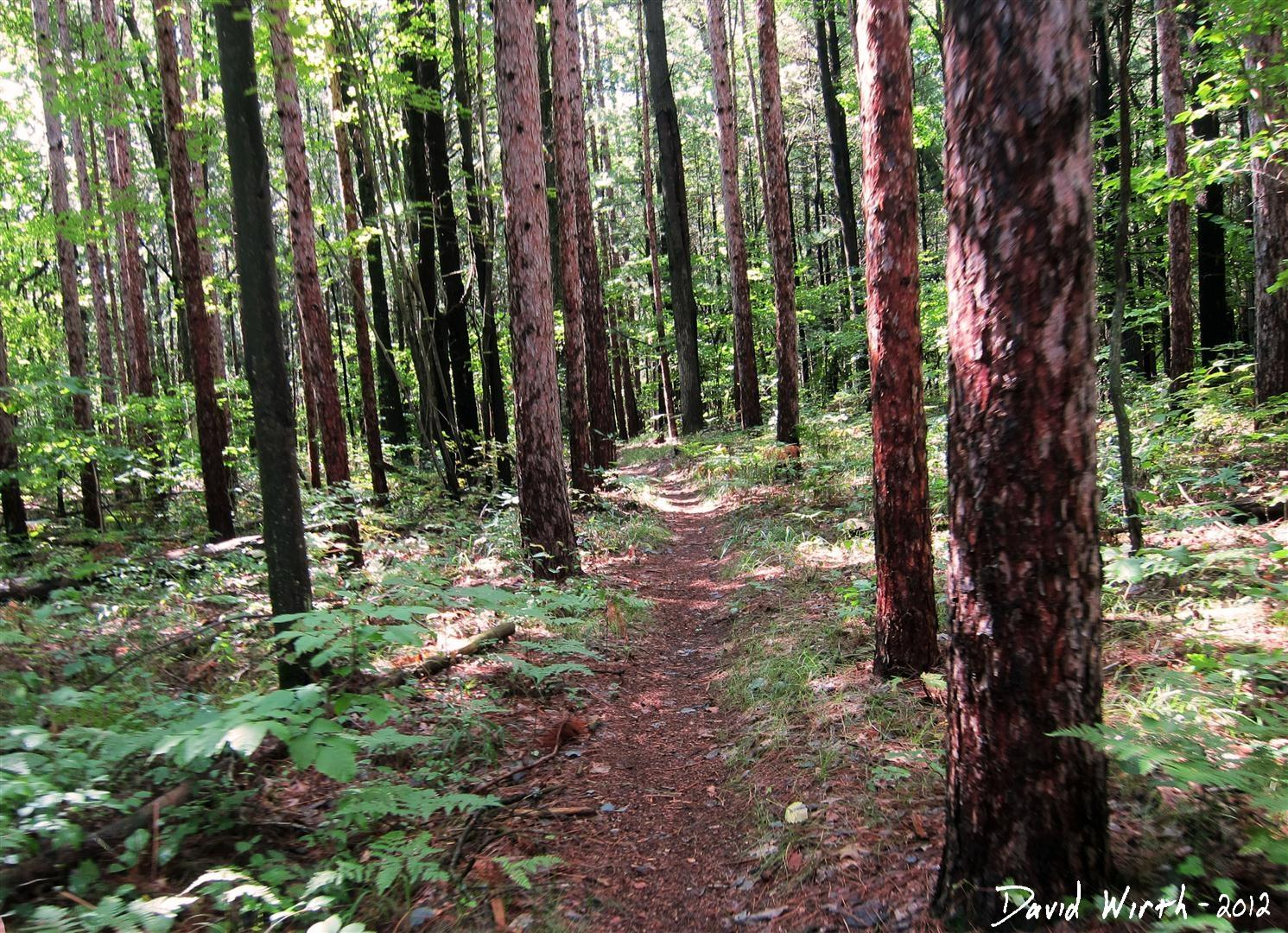 manistee national forest trail, pint trees, marker