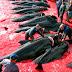 Momento Reflexão #02 - Ilhas Faroé, na Dinamarca: O terror das baleias-piloto