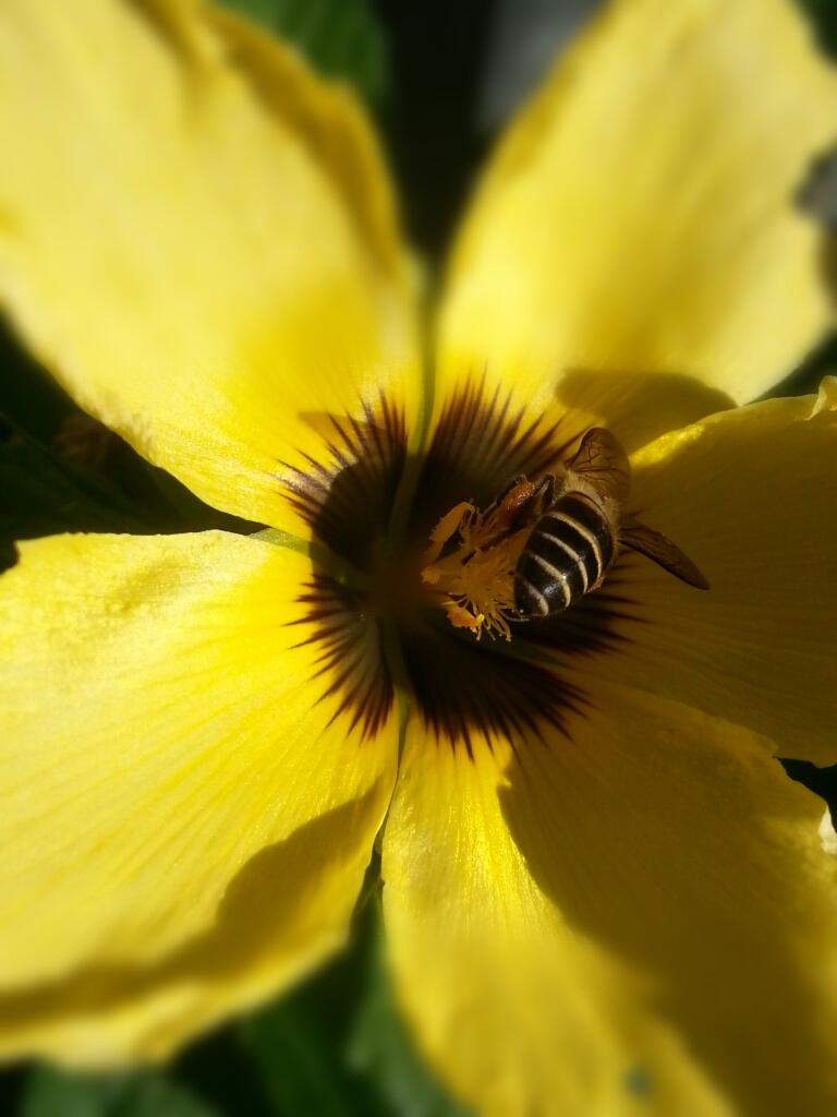 Bunga mekar, lebah