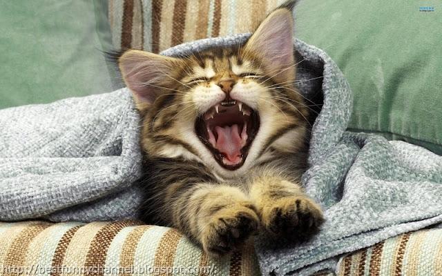 Funny small kitten.
