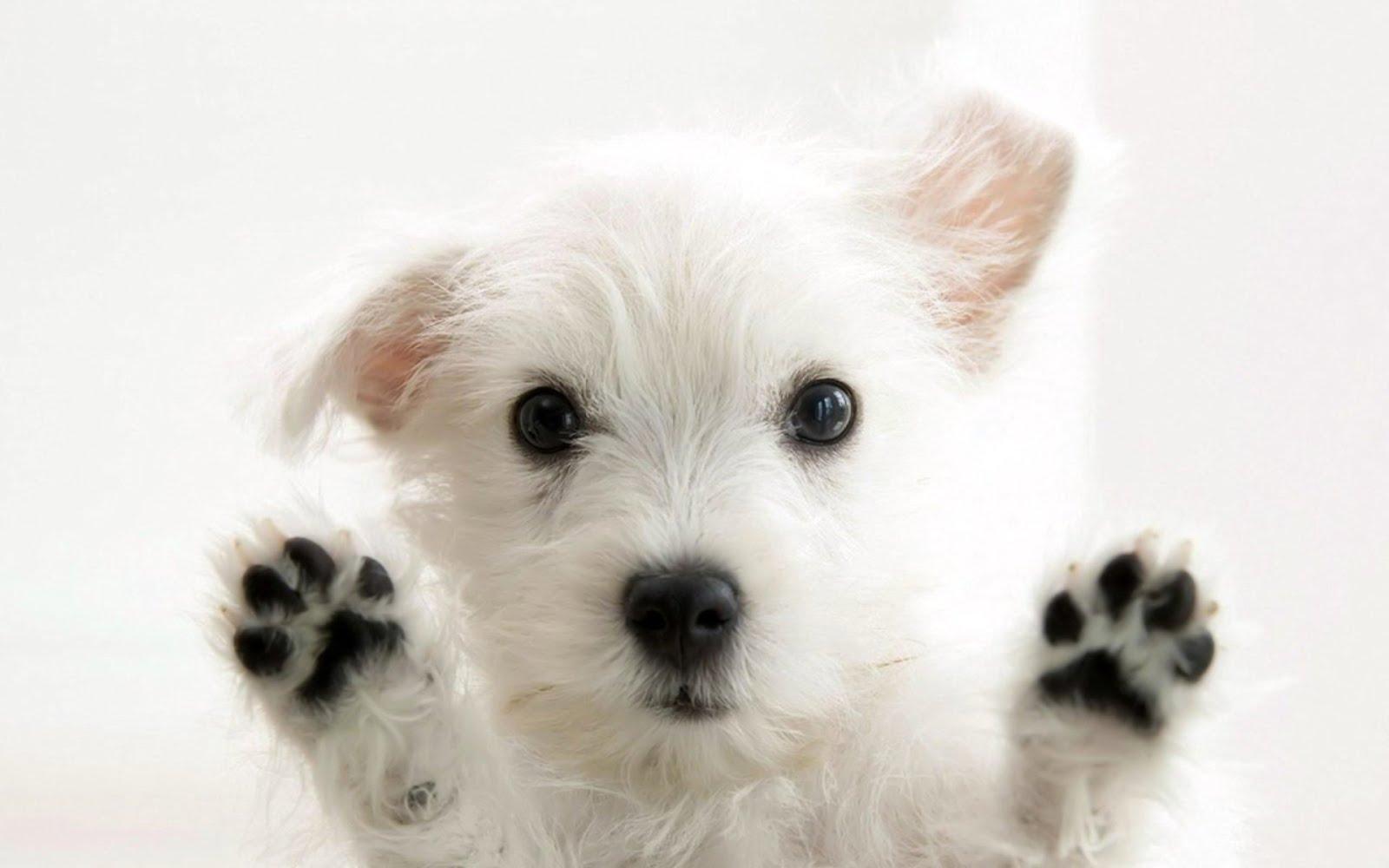 Aprenda a adestrar o seu cãozinho!