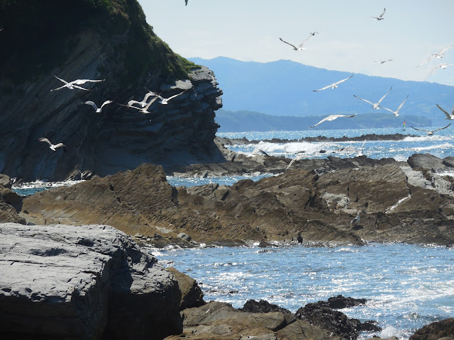 seagulls-saint-jean-de-luz-beach-france-surf-trip-2015-atlantic-ocean-spaander-sealiberty-cruising
