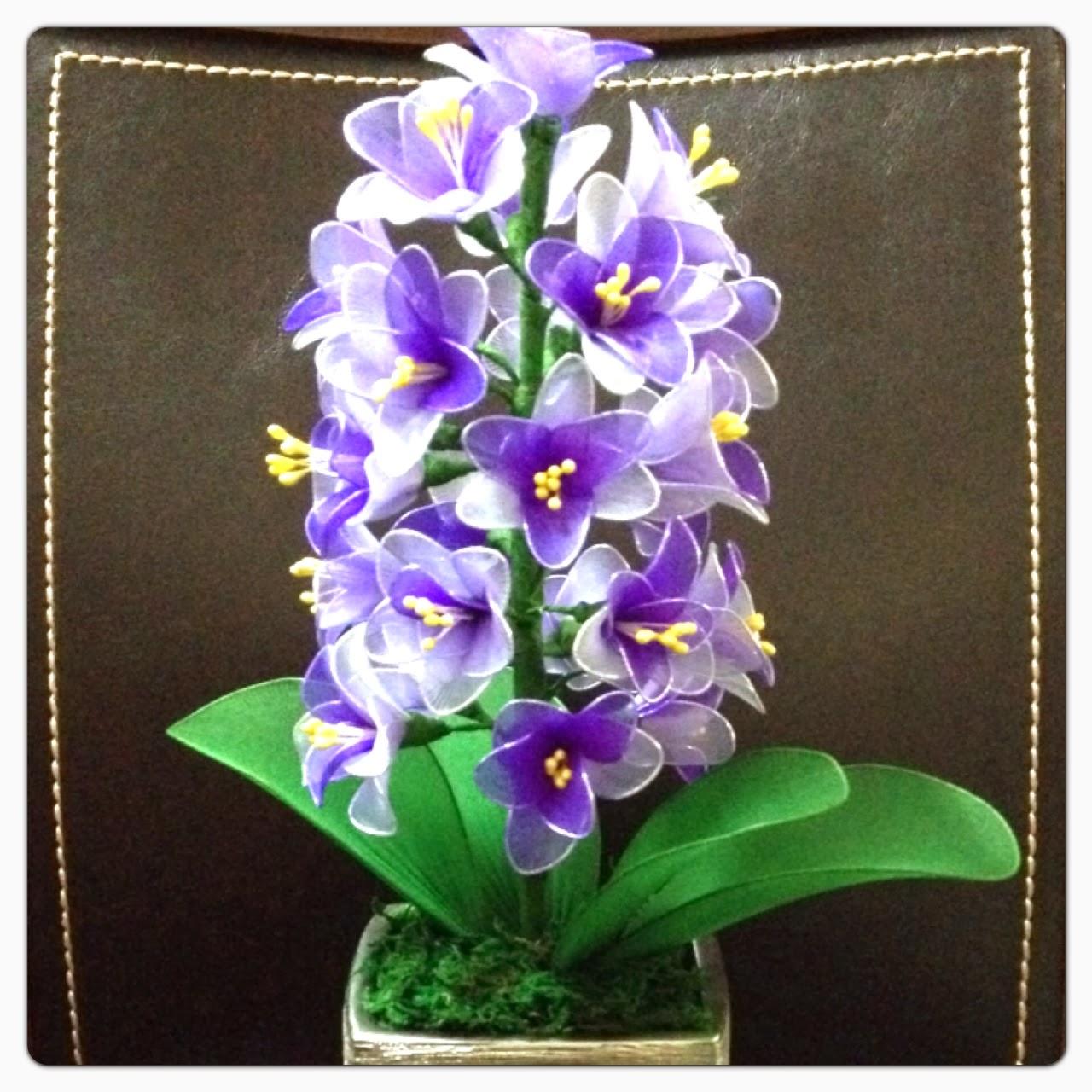 风信子 ( Hyacinth )