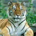 Click here to visit Wikispecies website