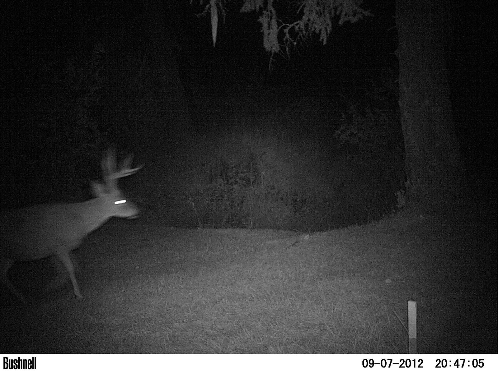 Download image Scary Trail Cam PC, Android, iPhone and iPad
