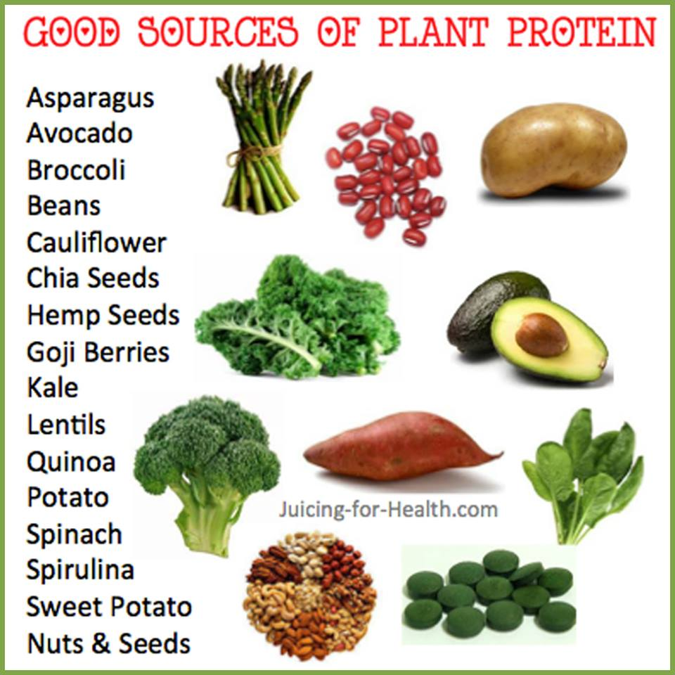 8 No Meat Protein Sources forecast