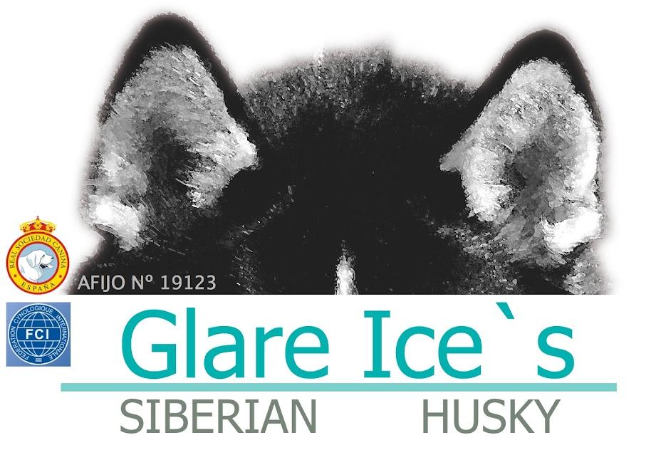 Glare Ice´s;  Criadores de  Siberian Husky. Cachorros eventualmente