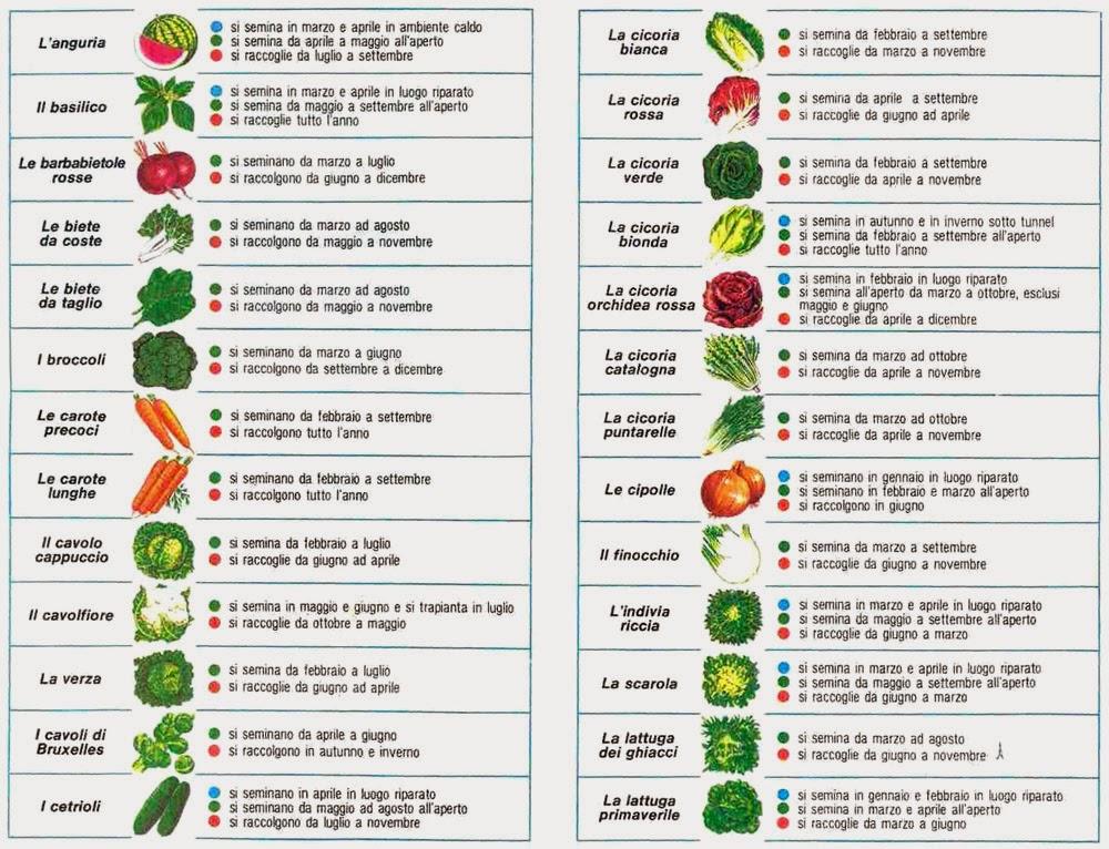 Conoscere gli ortaggi di stagione orti in affitto ladispoli for Ortaggi estivi