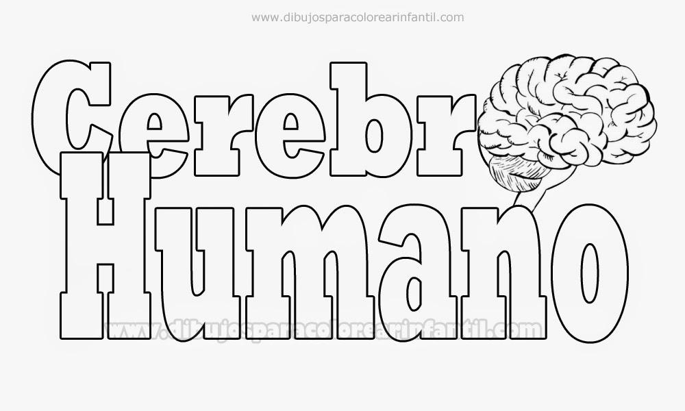 Contemporáneo Páginas Para Colorear Del Cerebro Imagen - Páginas ...