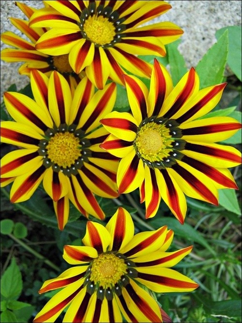 Um jardim para cuidar Flores no seu jardim no inverno ?? sim !!