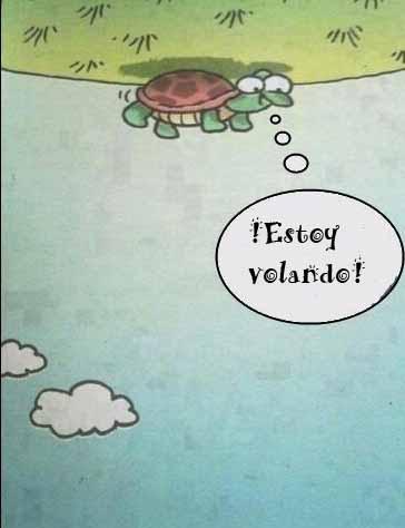tortuga voladora