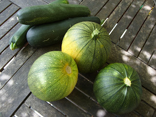 summer squash; zucchini