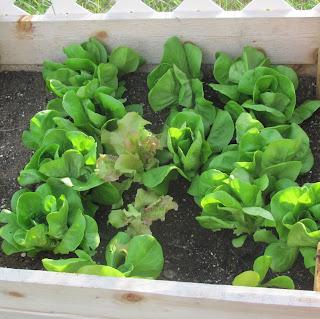 http://ichoosejoy2day.blogspot.com/2015/06/garden-fresh-mediterranean-salad.html