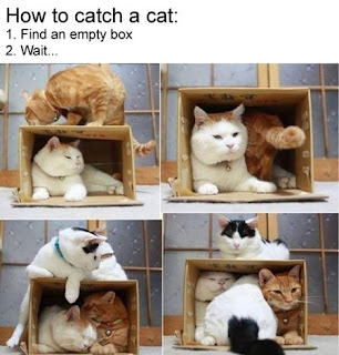 cats getting into a cardboard box funny