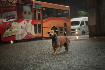 Disaster Plans: Prep For Floods