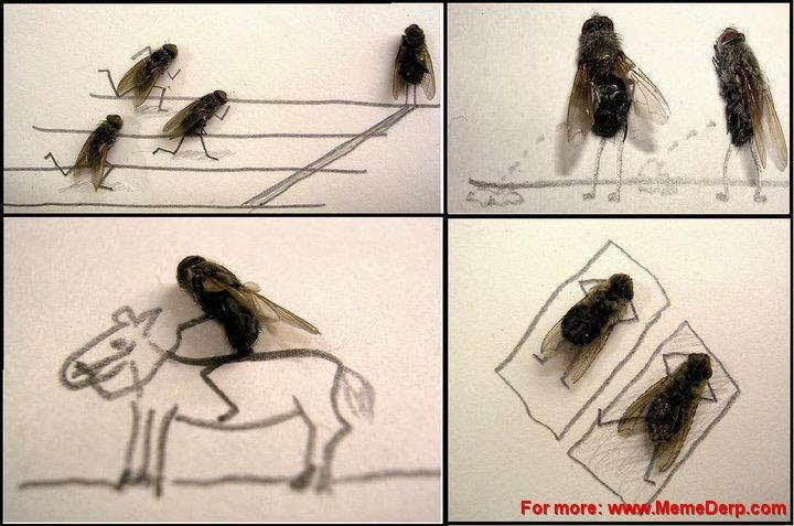 Dead Flies Art