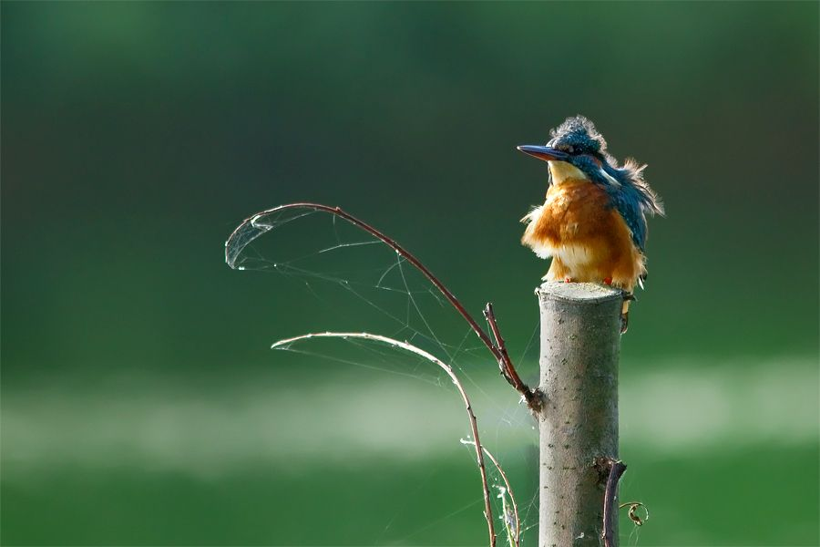 8. Bad Hairday by Roeselien Raimond