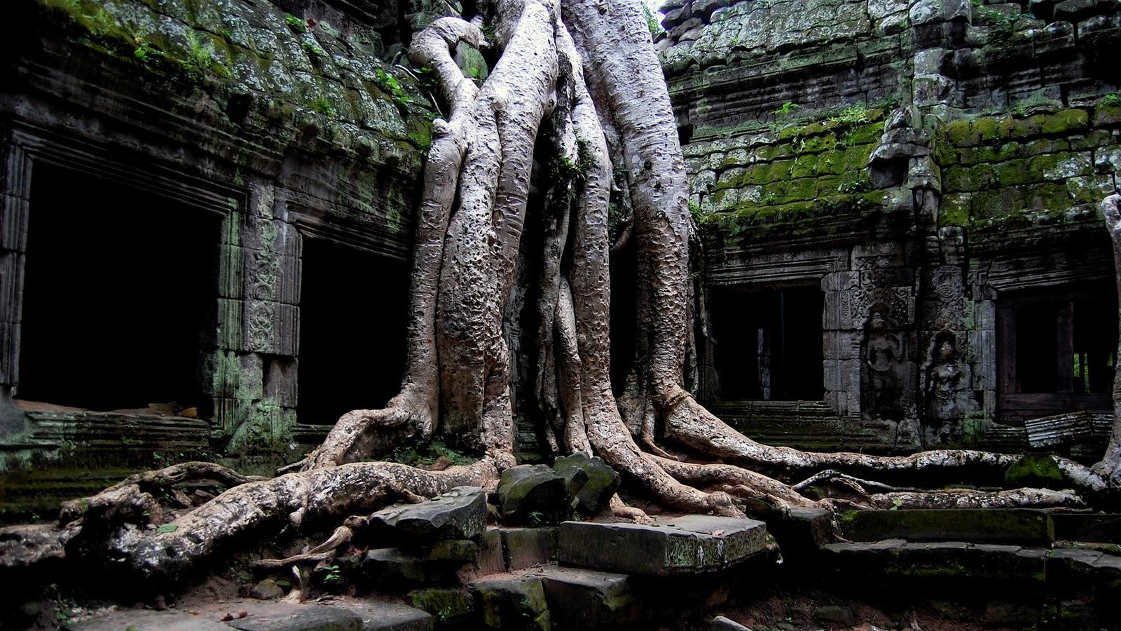 http://2.bp.blogspot.com/-zPkUWMWgI6s/TsvIC6sb73I/AAAAAAAAK-k/lEhxX1P-mKw/s1600/Nature+Wallpaper+HD+1080p+AAEA.jpg