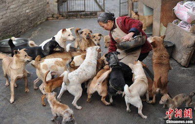 Chinese Grandma Spends All Her Life Savings Taking Care of Stray Dogs and Cats