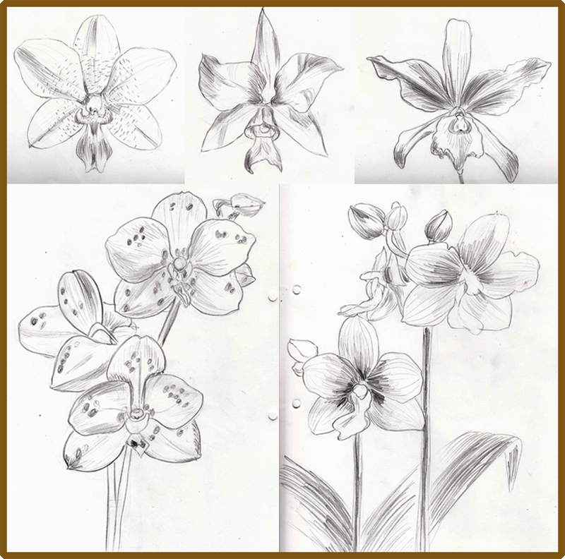 Orchid Flower Line Drawing : Weekly doodles and tuts how to draw an orchid flower