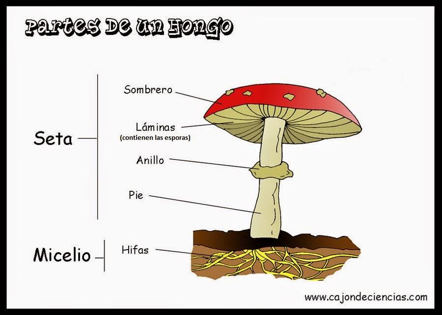 Como curan el hongo en el pie en kitae