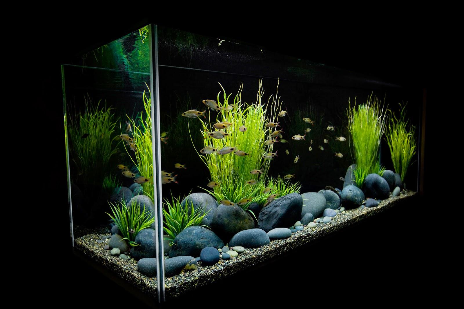 Kumpulan foto aquarium aquascape keren foto bugil bokep 2017 - Gambar aquascape ...