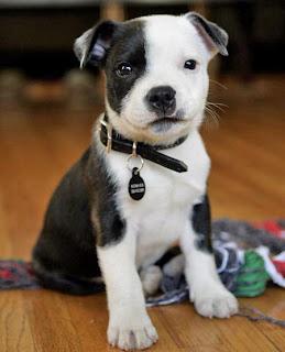 choosing puppy dog training