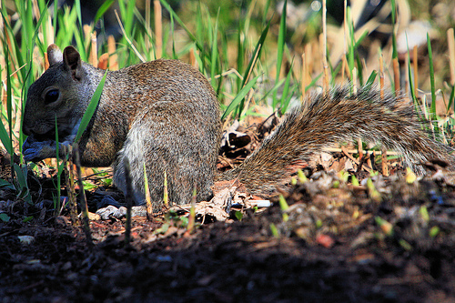 Back to the basics guest post how to keep garden pests - How to keep squirrels away from garden ...