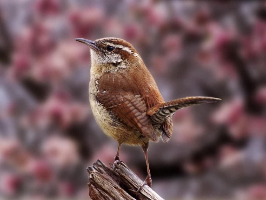 http://2.bp.blogspot.com/-zR7NyItApVQ/TlEp69zCDwI/AAAAAAAAAzg/aiQBdQbWo9E/s1600/Magnificent_Bird.jpg