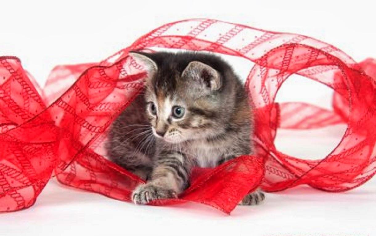 Querido gatito