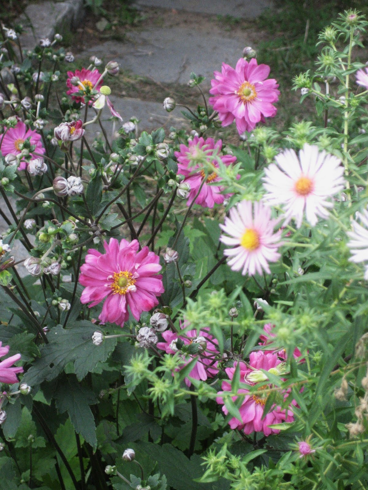 Rebecca vella design end of summer at vella gardens - Fall blooming flowers ...