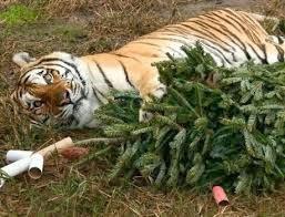 Cat Christmas Tree.