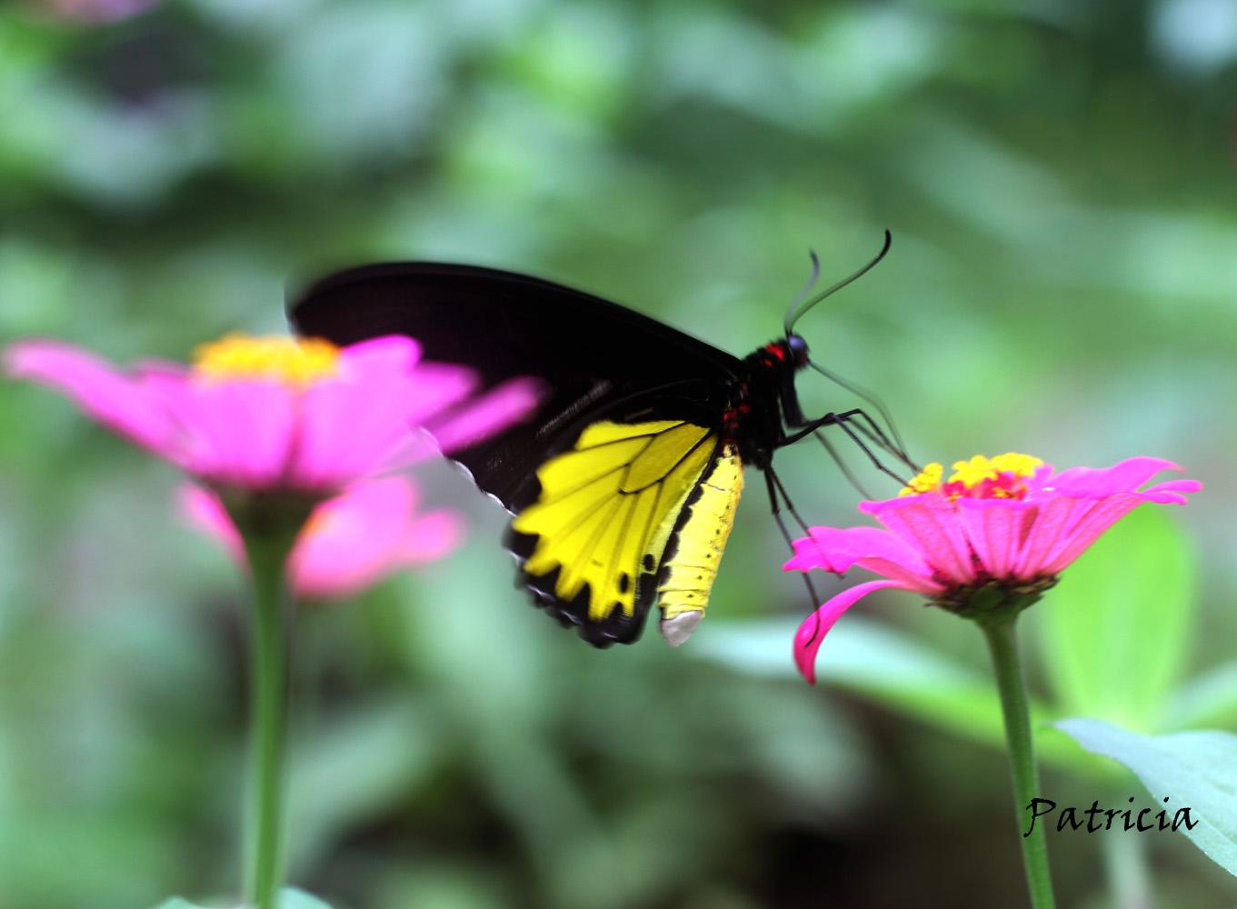Resultado de imagen para maria mariposa y Chuang Tzu