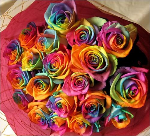 6 'قوس قزح' من أجمل الزهور التي قد تراها   حقن الزهور بصبغات مختلفة
