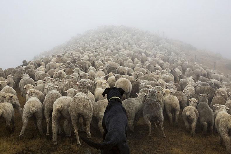 Fotógrafo muestra algunos de los más duros empleo caninos