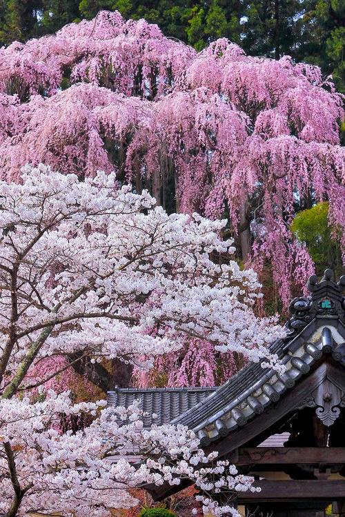 Marycot jardines japoneses for Arboles jardin japones