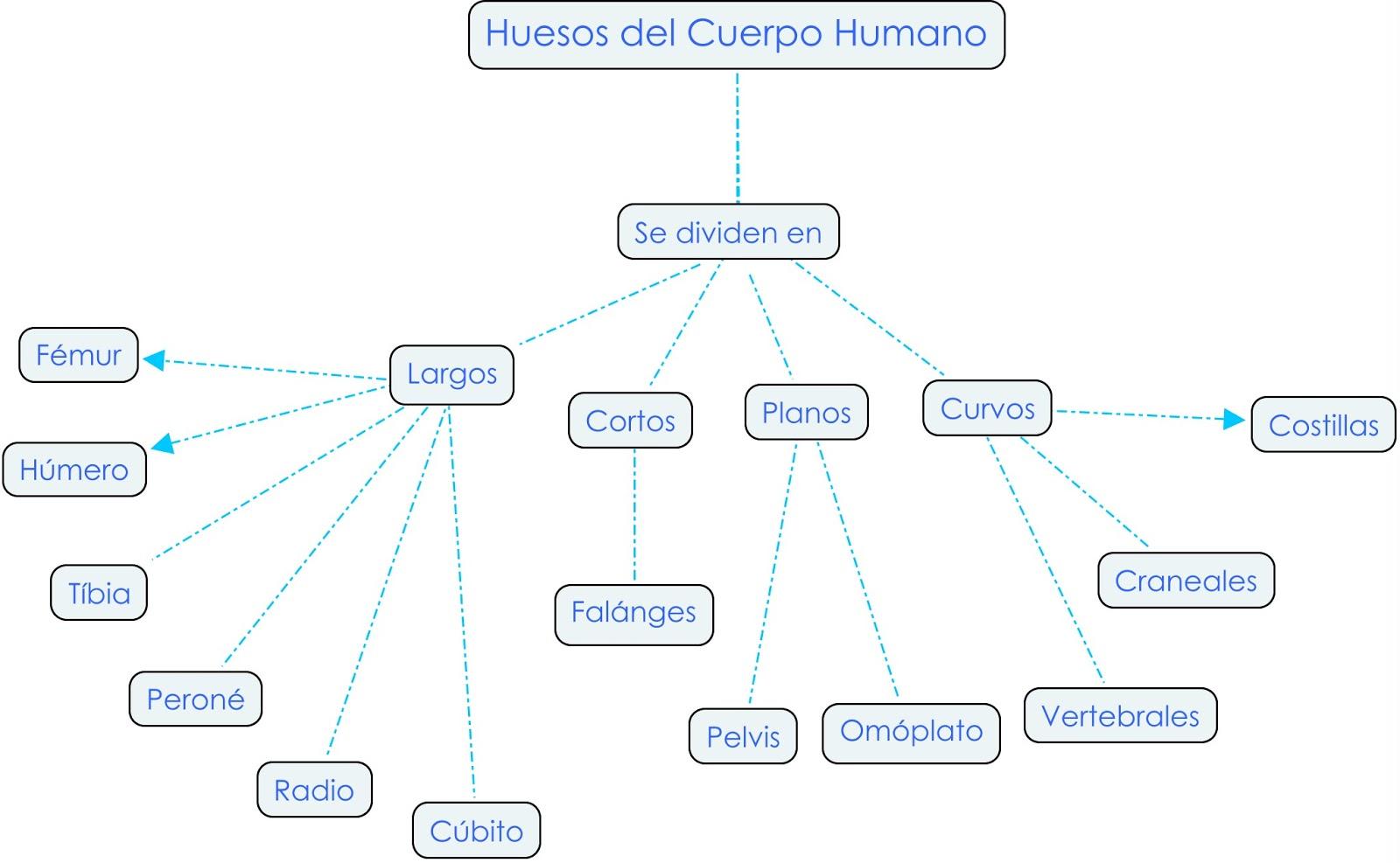 Lujo Huesos De Diagrama De Cuerpo Patrón - Anatomía de Las ...