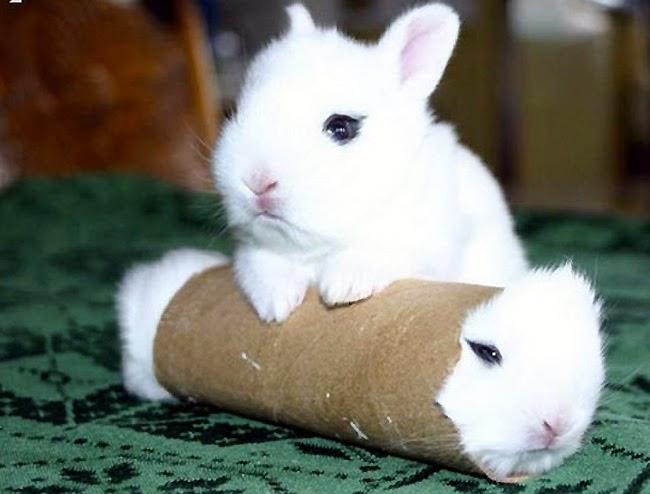 El blog de las mascotitas juguetes para conejos - Juguetes caseros para conejos ...