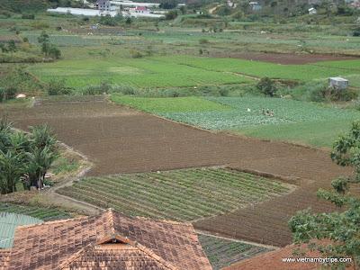 Dalat city - plant vegetables