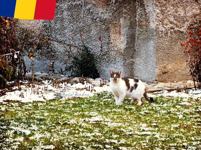 pisica biserica sanpetru brasov