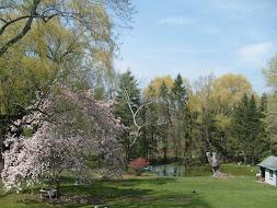 Our backyard pond...