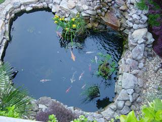 cara-membuat-kolam-ikan-koi