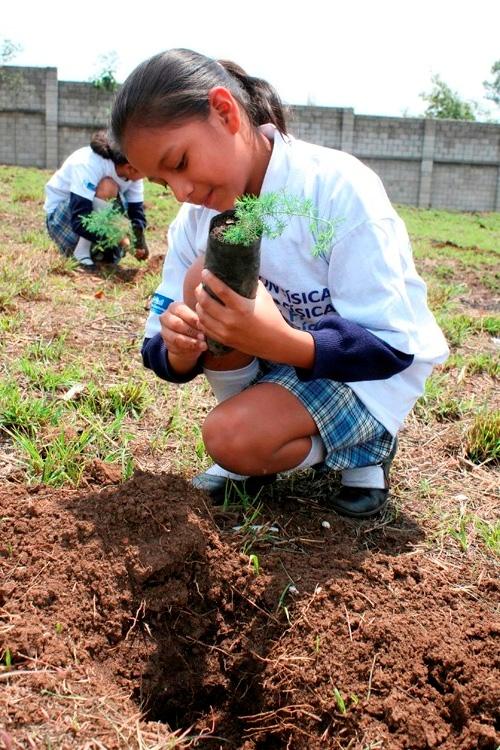 Niños sembrando arboles imagenes - Imagui