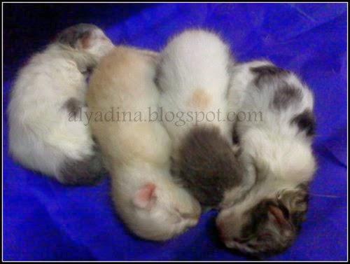 Baby Kucing