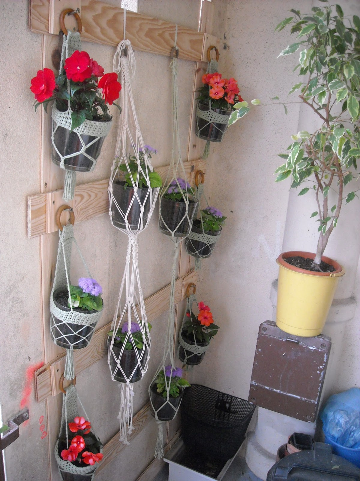 Bambou chocolat en mode fleuri diy for Plante qui aime l ombre