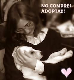 No compres uno de raza, adopta a uno sin casa!!!