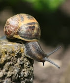 Stories from Brother Snail's daily life at Crowfield Abbey