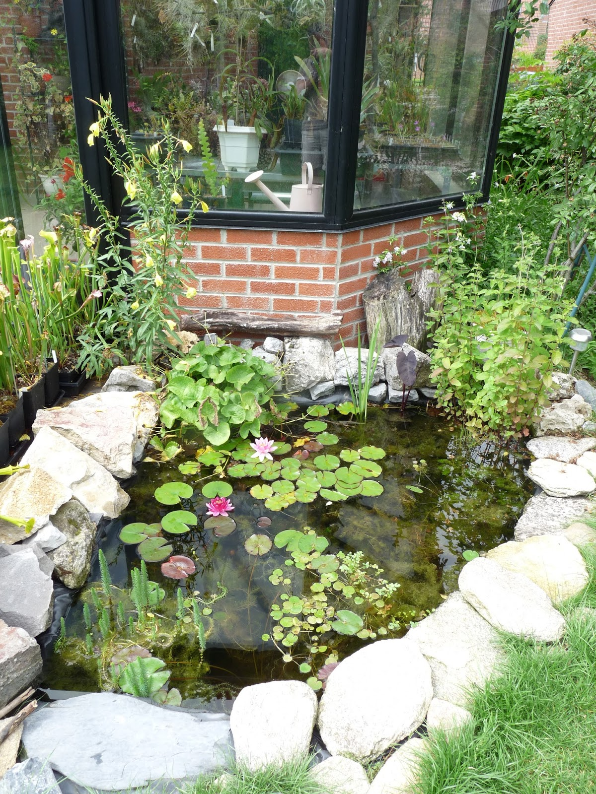 once a bog now a pond a garden u0027s chronicle