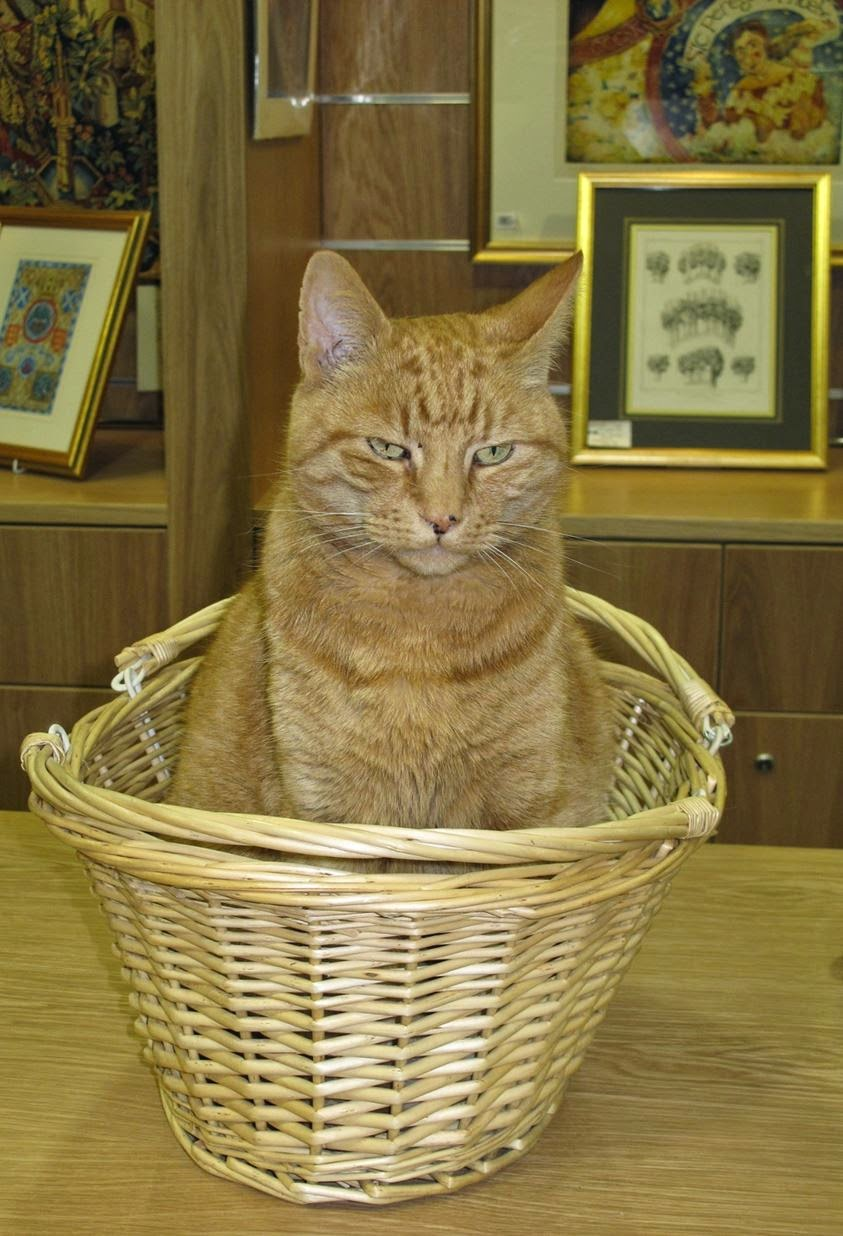 gato acusado de ser perigoso