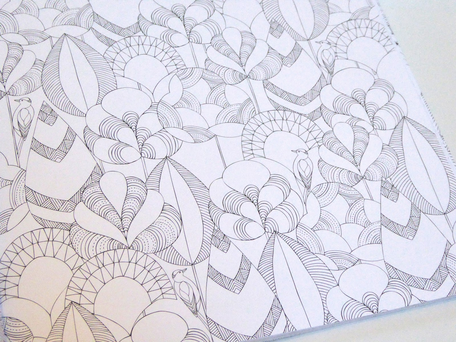 Animal Kingdom Colouring Book Malaysia Review Millie Marotta S Adult
